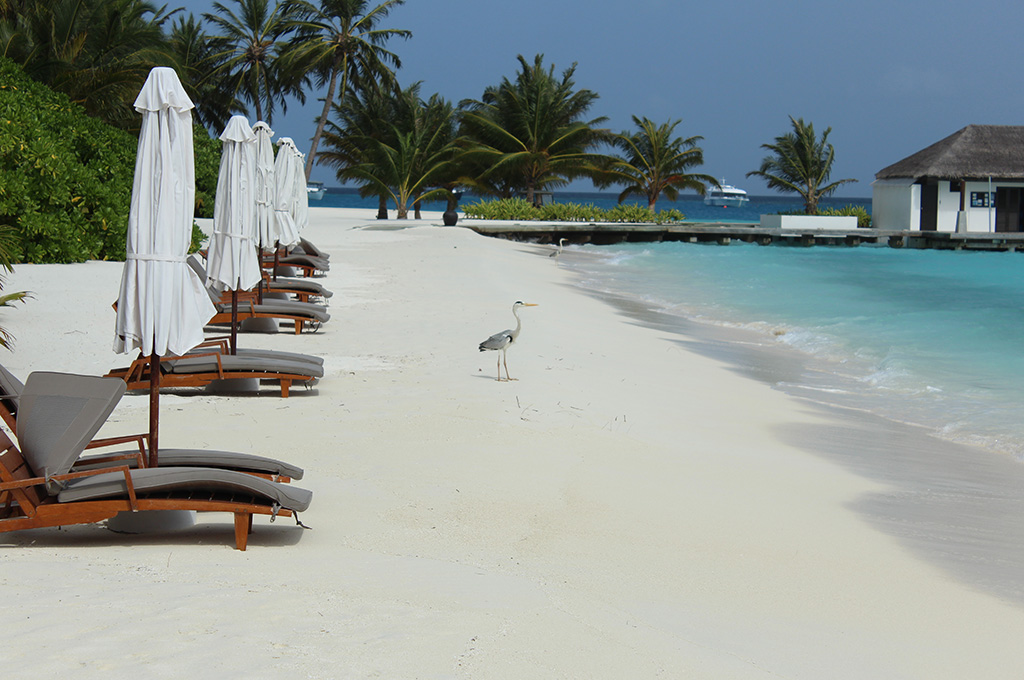 Our-Maldives-Vacation-and-Maldivian-Curry3