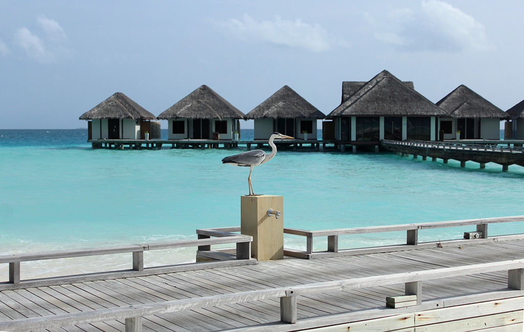 Our-Maldives-Vacation-and-Maldivian-CurryANm