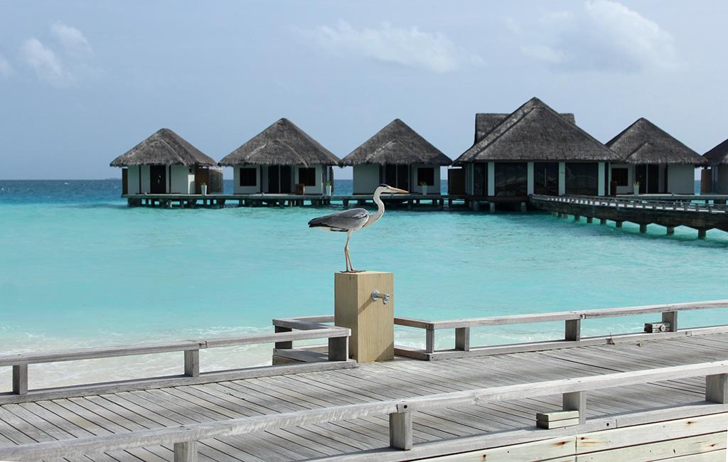 Our-Maldives-Vacation-and-Maldivian-CurryANm